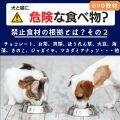 犬と猫に危険な食べ物?(その2)