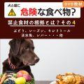 犬と猫に危険な食べ物?(その4)~ぶどう・レーズン、キシリトールほか~