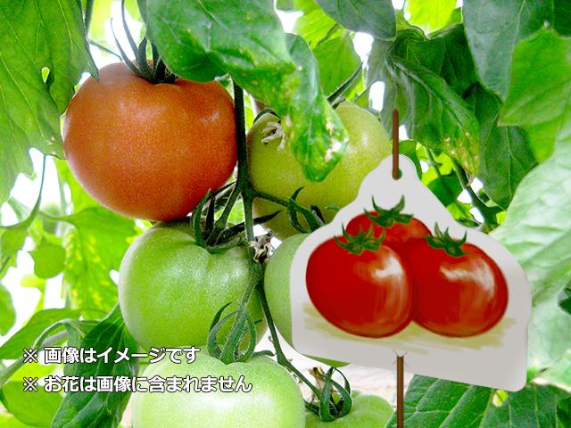 シンプルトマト2