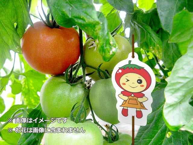 かぶり物トマト2