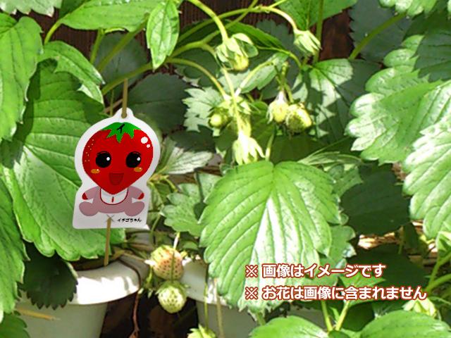 イチゴちゃん2