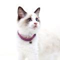 【猫用首輪】FLCサンドカラー 首囲18-28cm