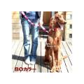 【中・大型犬用首輪】BOカラーMサイズ