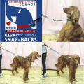 【犬用】【お出かけ】【リード】【引っ張り防止】犬用スナップバックスM