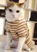 【新商品】猫用オーガニックオールインワン