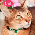 【新商品】【メール便対応】猫用首輪唐草ツートン