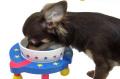 食器台ワンダープラネット超小型犬用【食器&食器台セット】