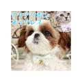 【メール便対応】PANOPLYアクアリボン・ネックレスグリーンピンクブルー犬猫用ベビーサイズ首輪カラー