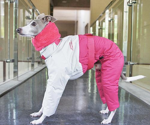 インサレイトスーツ イタグレサイズ
