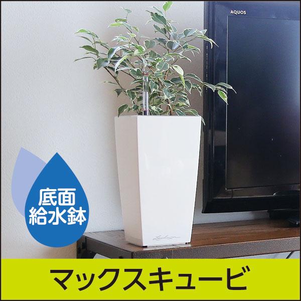 底面給水機能付きプランター【レチューザプレミアム】マックスキュービ・LECHUZA・プラスチック製