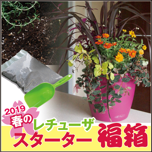 ☆送料無料・数量限定☆春のレチューザスターター福箱【エコノミー】ラウンド21・LECHUZA・プラスチック製