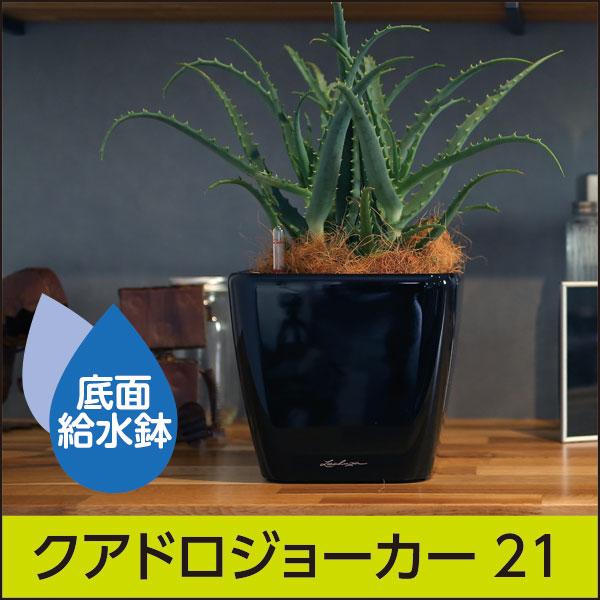 底面給水機能付きプランター【レチューザプレミアム】クアドロ・ジョーカー21・LECHUZA・プラスチック製
