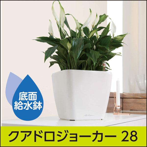 当店限定・底面給水機能付きプランター【レチューザプレミアム】クアドロ・ジョーカー28・ホワイト・LECHUZA・プラスチック製