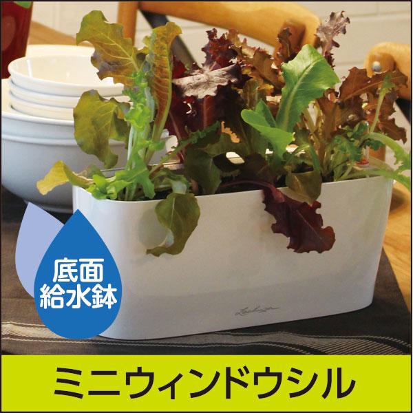 底面給水機能付きプランター【レチューザプレミアム】ミニウィンドウシル・LECHUZA・プラスチック製