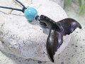 さりげない天然石がオシャレ★ウッド(木彫り)チョーカー テール【ハウライトターコイズ/WCH-1E-002】