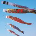 黄金金太郎鯉セット 8m 6点セット(鯉のぼりセット)【フジサン鯉】