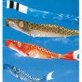庭用 平成錦鯉 30号 | 吹流し名入れ代込 ポール付 | フジサン鯉 こいのぼりセット 端午の節句