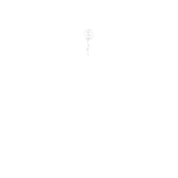 メッセージカード ローズ A6 シングル
