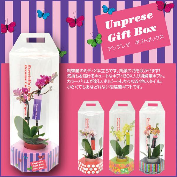 アンプレゼ Gift Box 胡蝶蘭ミディ2本立ち(6NA0205K)