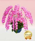 プレミアム・10本立ピンク大輪胡蝶蘭