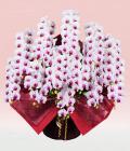 プレミアム・15本立ホワイト・レッド大輪胡蝶蘭