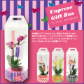 【4個セット】アンプレゼ Gift Box 胡蝶蘭ミディ2本立ち(6NA0205S4)