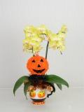 ハロウィン ミディ(カララ) 2F(かぼちゃカップ白・かぼちゃリース)(4NA0205HW1)