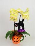 ハロウィン ミディ(カララ) 2本立て(かぼちゃカップ・黒猫リース) (4NA0205HW4)