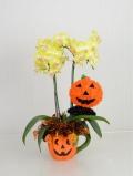 ハロウィン ミディ(カララ) 2本立て(かぼちゃカップ・かぼちゃリース) (4NA0205HW3)