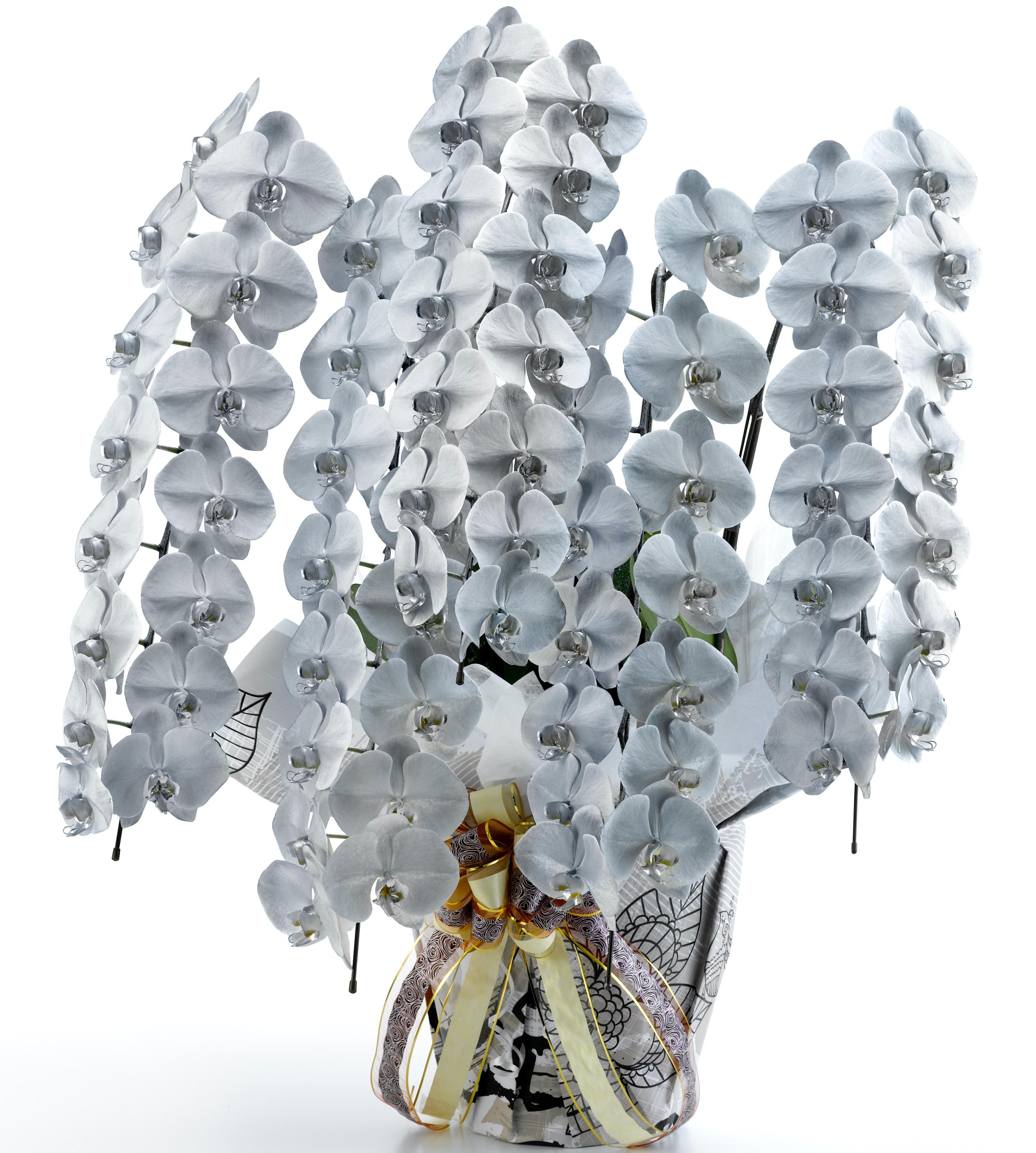 胡蝶蘭5本立 カラフルカラー プラス(外側染色・10色セレクト)