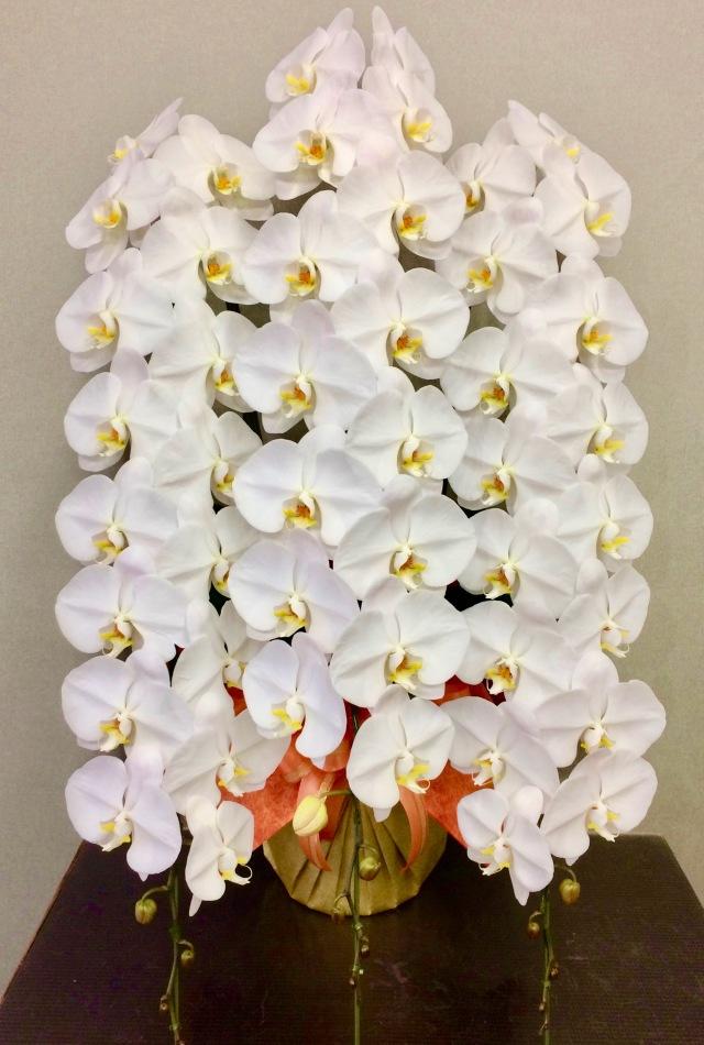 胡蝶蘭3本立 プレミアム