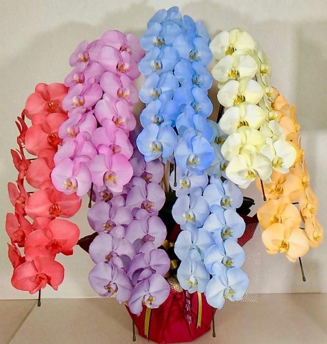 胡蝶蘭7本立 カラフルカラー (外側染色・10色セレクト)