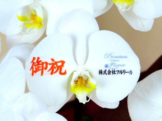 花びらメッセージ胡蝶蘭3本立 プラス ※ロゴ・写真入れ可