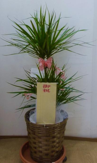観葉植物7,500円コース(インテリア鉢カバー付き)