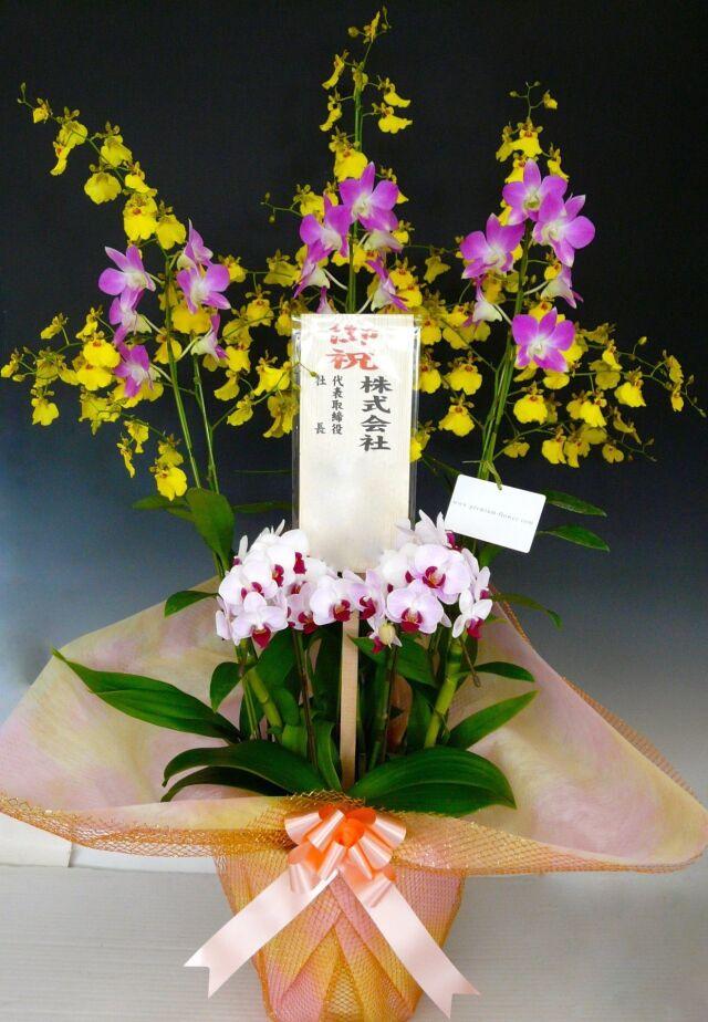 季節の洋蘭1.5万円コース