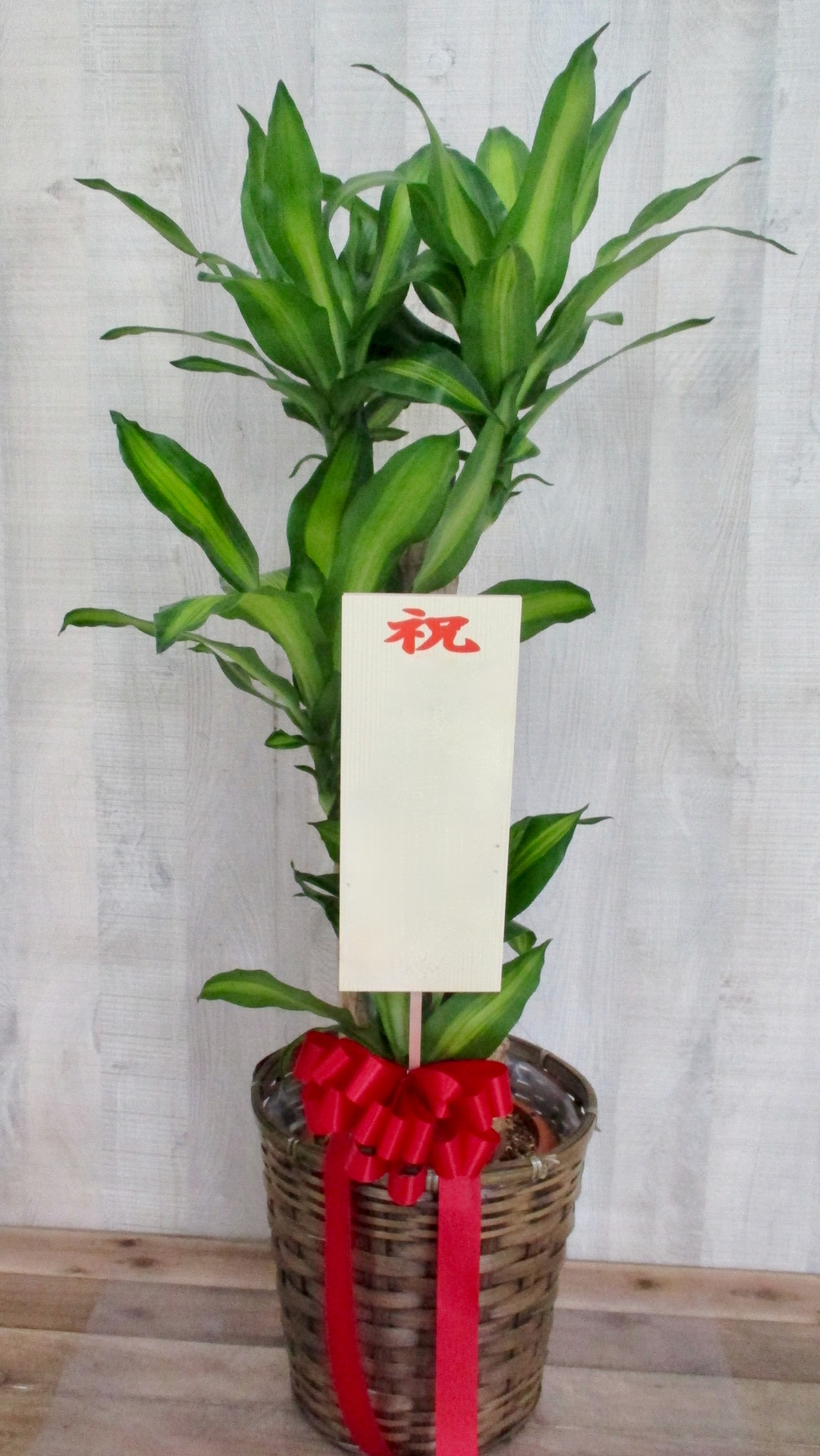 観葉植物1万円コース(インテリア鉢カバー付き)