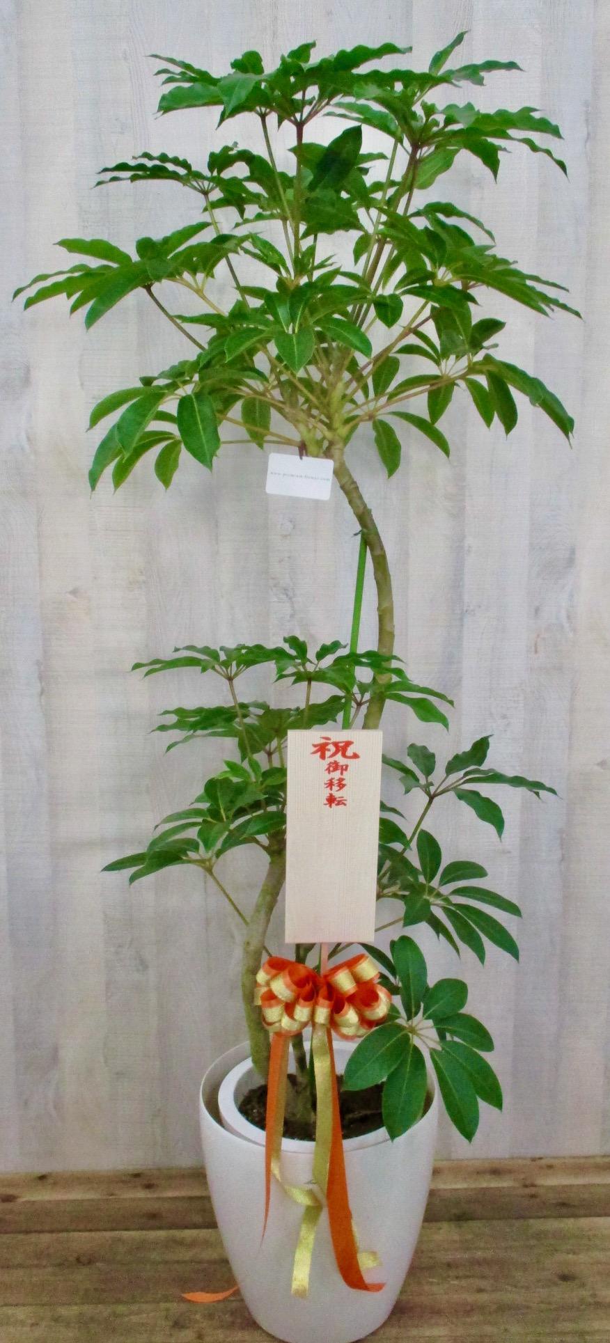 観葉植物2万円コース(インテリア鉢カバー付き)