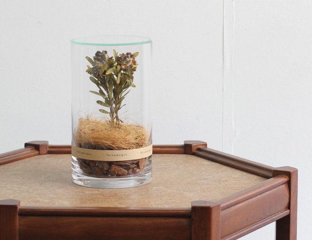 The Landscapers ランドスケーパーズ <DRY CYLINDER with LID> DC20 with LID『Pubescens』