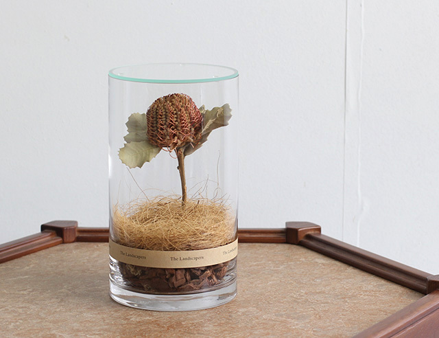 The Landscapers ランドスケーパーズ <DRY CYLINDER with LID> DC20 with LID『Banksia Coccinea』