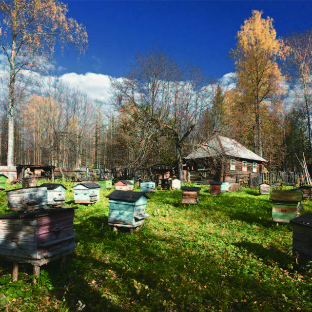 タイガの森の養蜂場