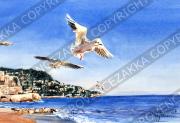 プロヴァンス風景絵画(NICE ニース / Baie des Anges & Mouette 天使の湾を飛ぶカモメ)PT_MRT_06