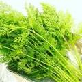うさぎ,野菜,うさぎ畑,にんじんの葉っぱ