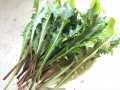 うさぎ,野菜,うさぎ畑,たんぽぽ,タンポポ,生,葉