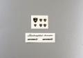 Hobby Design HD01_0044 1/24 ランボルギーニ ウラカン LP610-4 ロゴ【メール便可】