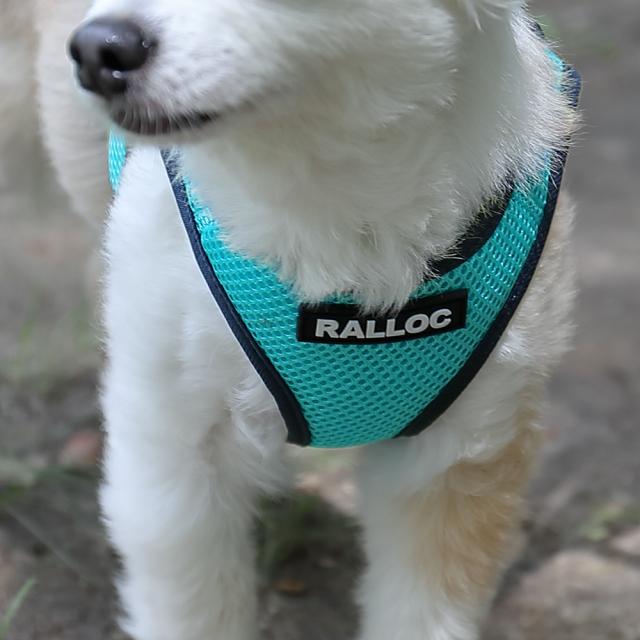 ラロック シンプルメッシュハーネス 犬用胴輪 青緑 着用写真