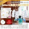 【エクセレント】高級大輪胡蝶蘭 5本立ち 55輪前後 白