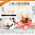 【ハイクラス】大輪胡蝶蘭 「友里愛」 3本立ち 26輪前後 白