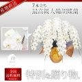 【プレミアム】最高級大輪胡蝶蘭 7本立ち 白