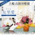 【スタンダード】大輪胡蝶蘭 「友里愛」 3本立ち 24輪前後 白