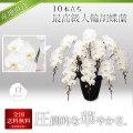 【プレミアム】最高級大輪胡蝶蘭 10本立ち 白